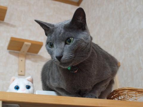 鏡餅猫(2012.01.08)