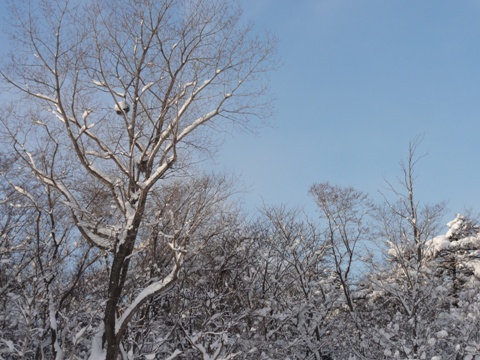 職場地方の冬の空(2012.01.11)