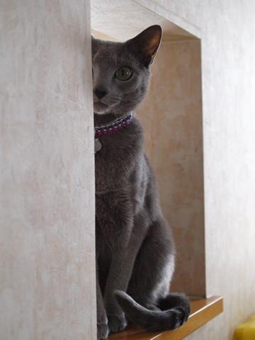 ニコライは見た!(2012.01.14)