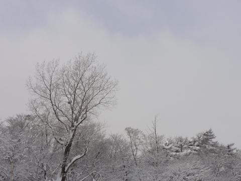 本日の様子03(2012.01.17)