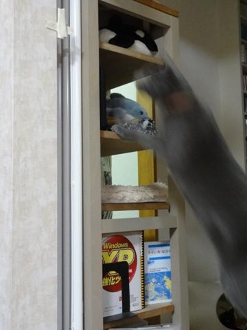 好奇心いっぱい02(2012.01.18)