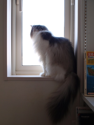 除雪見物01(2012.01.21)