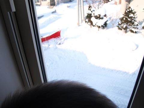 除雪見物02(2012.01.21)