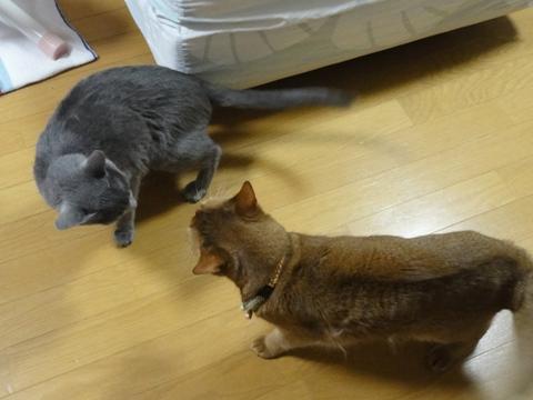 やっぱりおにーにゃん13(2012.01.26)