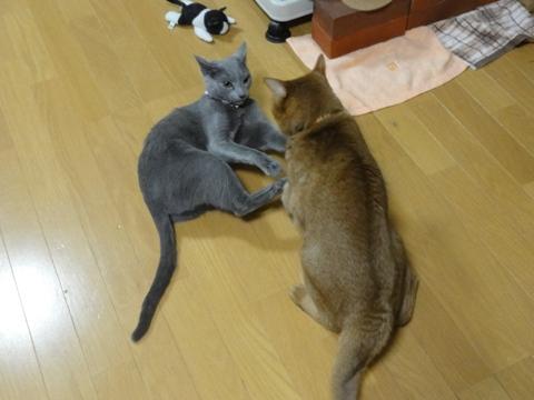 やっぱりおにーにゃん01(2012.01.26)
