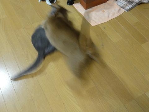 やっぱりおにーにゃん02(2012.01.26)