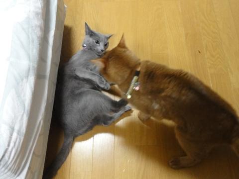 やっぱりおにーにゃん06(2012.01.26)