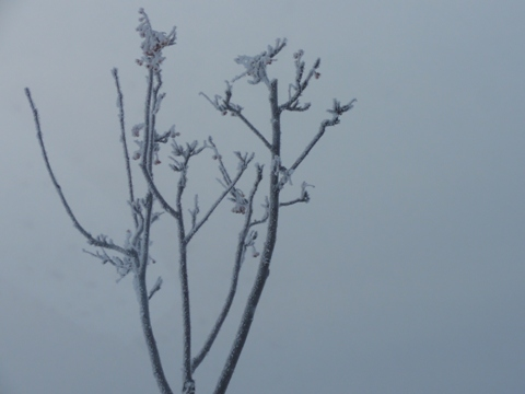 樹氷01(2012.02.01)