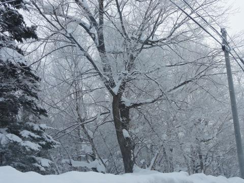 樹氷02(2012.02.01)