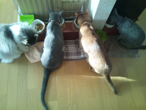 みんにゃもぐもぐ(2012.02.04)