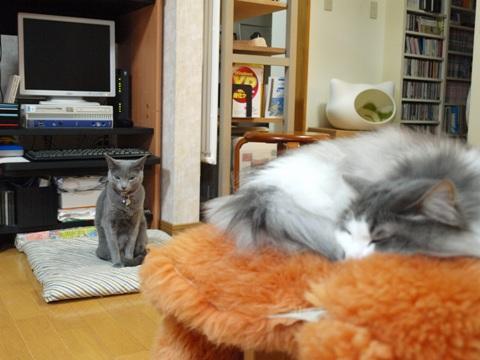 気まま? 意のまま?04(2012.02.22)