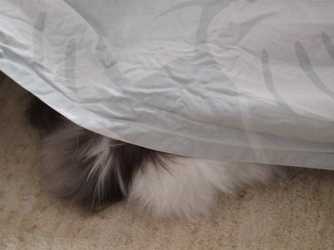 フレイの寝姿(2012.03.03)