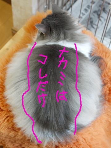 なんちゃってデラックス02(2012.03.12)
