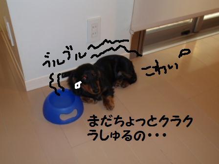 1-090211001.jpg