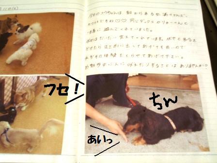 1-20090806042.jpg