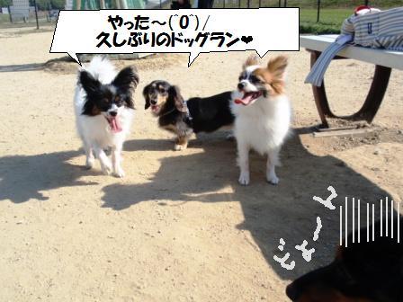 11-091024014.jpg