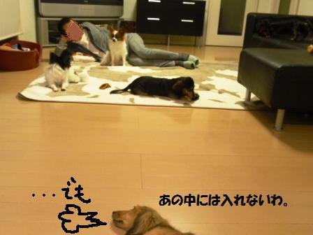 11-091101079.jpg