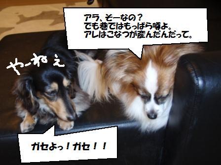 2-090502011.jpg