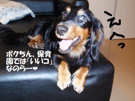 2-20090806016.jpg