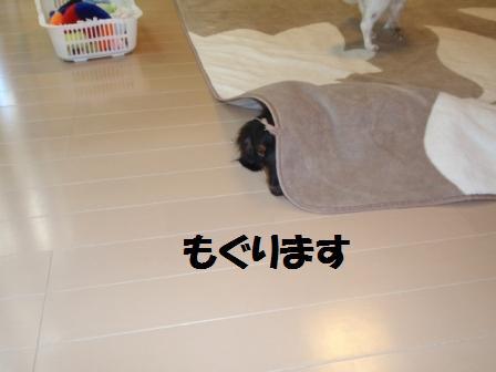 2-20090811060.jpg