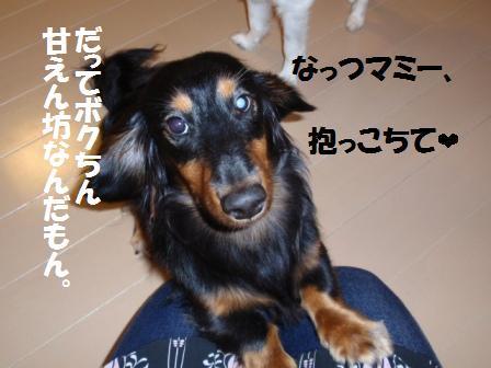 5-20090806005.jpg