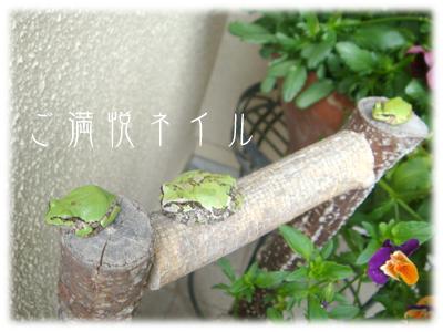 カエルちゃん~♪