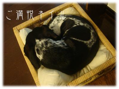 かご犬~♪
