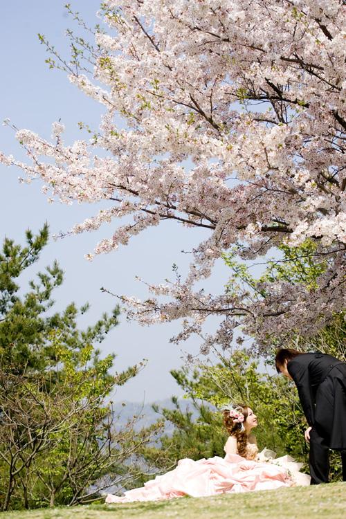 090410sakura.jpg