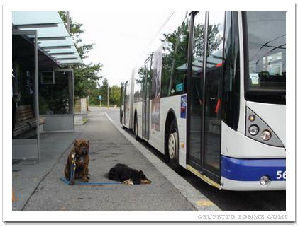 これは本物のバス停