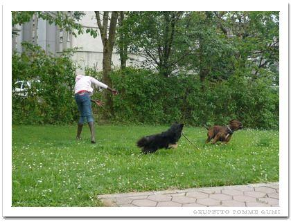 ボールで犬嫌いを克服
