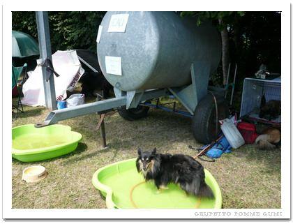 牛の飲み水タンク?