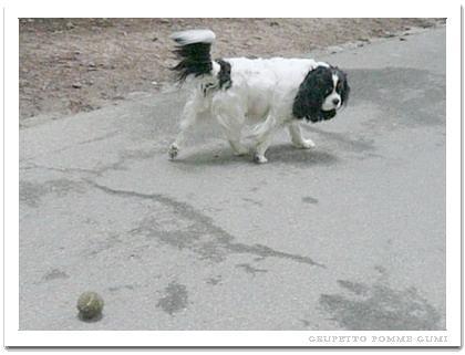 ボールとったろか?