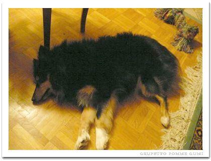 3本足で寝るグルペット