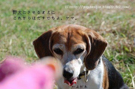 DSC_3645.jpg