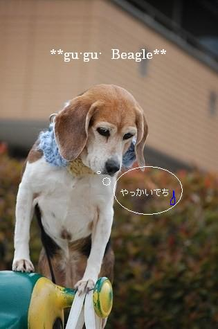 DSC_7118.jpg