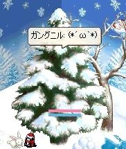 もみの木(*´ω`*)