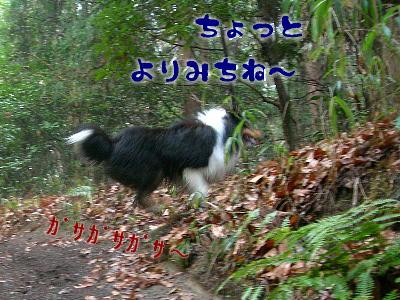 090219_g_06.jpg