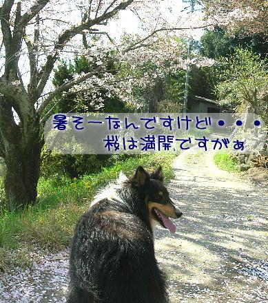 090422_g_01.jpg