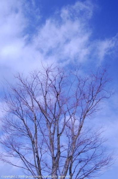 sky ・ a tree