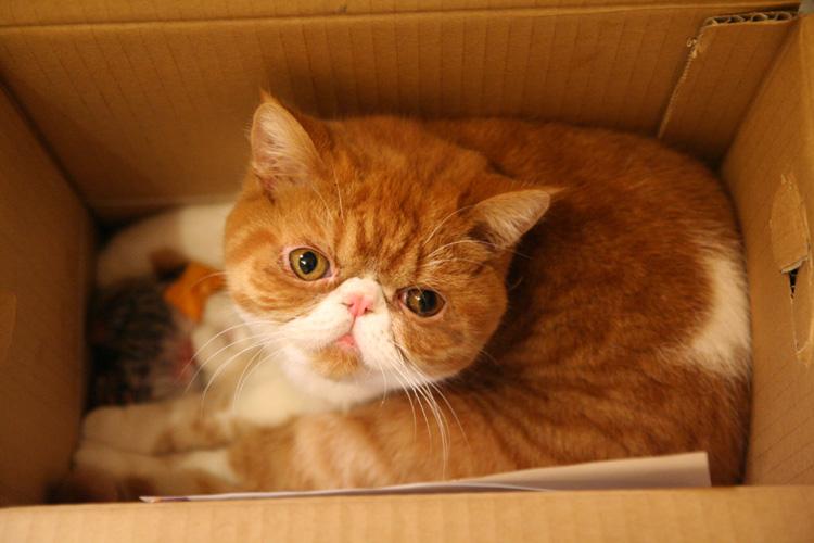 箱ですか2