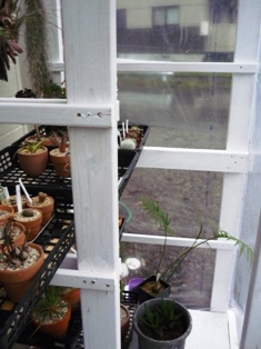 温室写真2