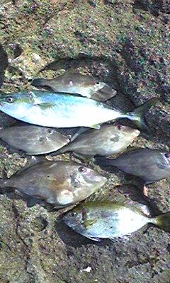 隠岐 大森島 午前中の釣果