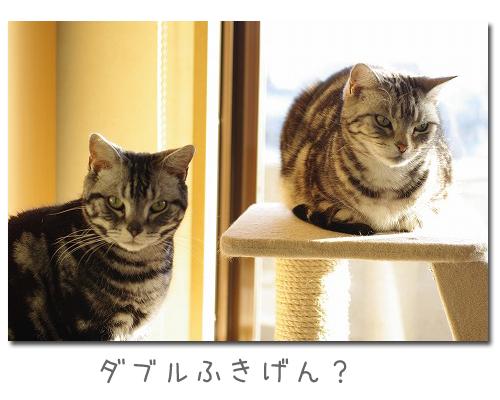 two2.jpg