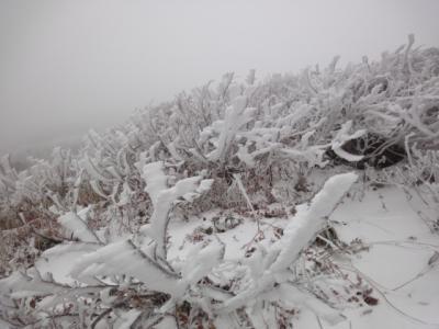 羅臼岳 065