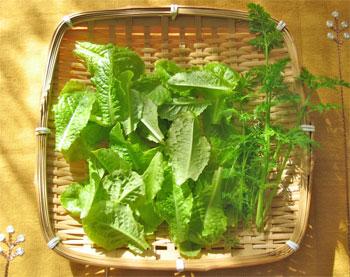 2012_ベランダ野菜1