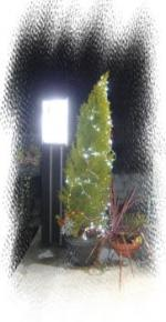 tree1_convert_20081209185338.jpg
