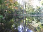 もちろんこんな立派な池や里山ではありません。