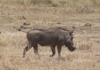 201108kenya - 0023