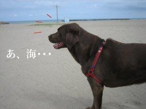Img_0296砂浜