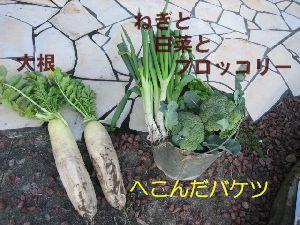 IMG_0101-1.jpg